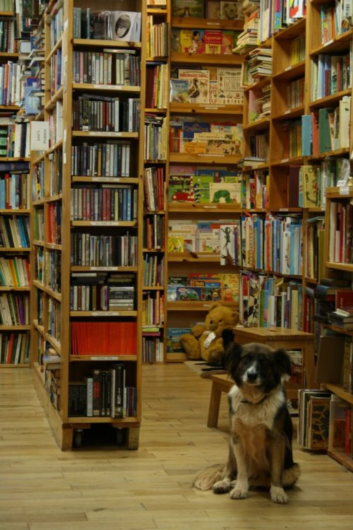 Bookshelves at Berrydin Books Berwick-upon-Tweed Northumberland
